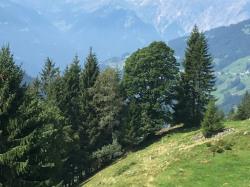 Kneipp_Vorarlberg_Landeswandertag_Silbertal__2498